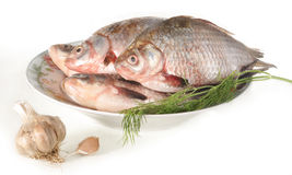Fish on a plate. The fish caught in the river, ready for preparation Royalty Free Stock Photo