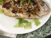 Fish on a plate. Grilled fresh fish on a plate - meal time stock images