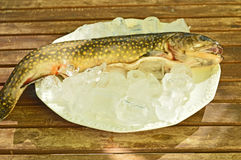 Fish on a plate Stock Photography