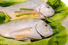 Fish in the plate Stock Photography