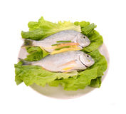 Fish in the plate Royalty Free Stock Photo