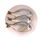 Fish in the plate Stock Image
