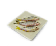 Fish on plate Stock Photo