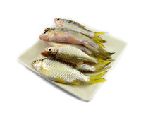 Fish on plate Stock Photography