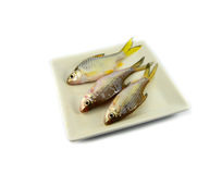 Fish on plate Royalty Free Stock Photo