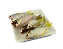 Fish on plate Royalty Free Stock Image