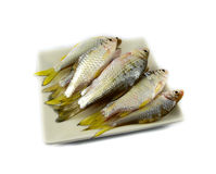 Fish on plate Royalty Free Stock Photography