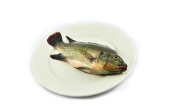 Fish on plate. Tilapia Fish on plate on white background royalty free stock images