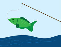 Fish on a Pole. Fish caught on a fishing pole Royalty Free Stock Photography