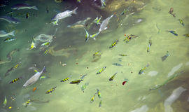 Fish and Pollution. Fish swim in tropical waters sadly filling with pollution Royalty Free Stock Images