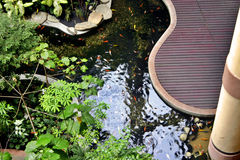 Fish Pond Royalty Free Stock Photo