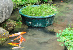 Fish pond Stock Photography