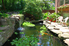 Fish pond. Koi and goldfish pond with water plants Royalty Free Stock Images