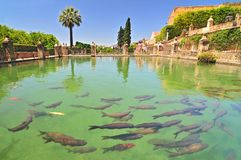 A fish pond in Alcazar de los Reyes Cristianos, Cordoba, Spain. royalty free stock photography