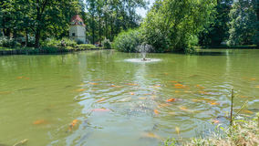 A fish pond. A pond with the beautiful colorful fishes and trees oround Stock Image