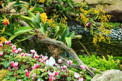 Fish In The Pond. Colorful Flower Garden With Fish In The Pond Royalty Free Stock Photos