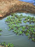 Fish pond Stock Images