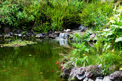 Pond and green trees around Royalty Free Stock Photography