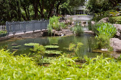 Fish pond in Hong Kong Park, Central District, Hong Kong Island Royalty Free Stock Photography