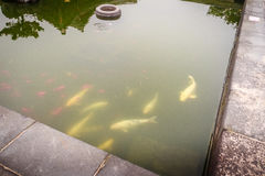 Fish pond in Jeju Mokgwana, the oldest remaining building in Jej Stock Images