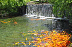 Fish Pond In The Park Stock Image