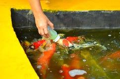 Fish pond at Phraya Suren temple Stock Image