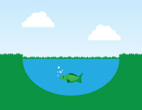 Fish in Pond. Fish in a pond with surrounding grass Stock Image