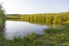 Fish pond. View of a fish farm pond from Romania Royalty Free Stock Images