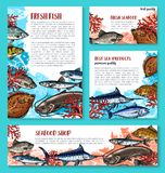 Vector fishes sketch poster for seafood market. Fish poster or banner sketch design template for fisher market or fishing sport shop. Vector fresh marlin, trout Stock Photography