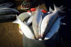 Fish pot in a Papua market. Fresh fish pot in a Papua market at sunrise Royalty Free Stock Photos