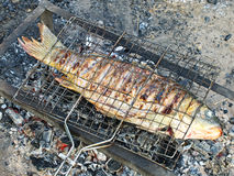 Fish is preparing on grill. Royalty Free Stock Photography