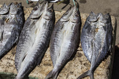 Fish preservation by drying Royalty Free Stock Photo