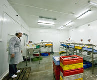 Fish processing. Workers in a fish processing plant stock photo