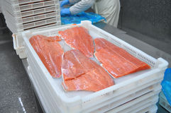 Fish processing factory stock image