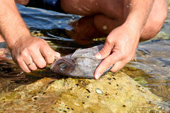 Fish processing Royalty Free Stock Images