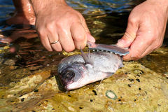 Fish processing Royalty Free Stock Photos
