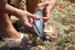 Fish processing Royalty Free Stock Photography