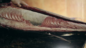 Fish production guys undress a body of big swordfish clean from skin make fillet stock video