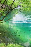 Fish in pure transparent water of Plitvice lakes Stock Photography