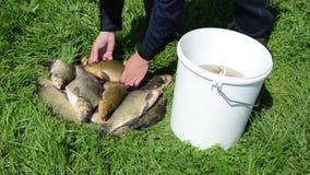 Fish put bucket Stock Image