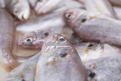 Fish. The fish, put in the seafood market to sell. A close-up of fish Royalty Free Stock Images