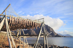 Fish racks and Lofoten mounts Stock Images