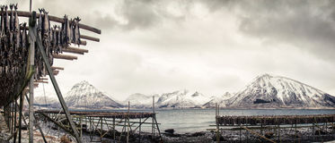 Fish racks on the Lofoten Royalty Free Stock Photos