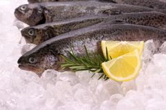 Fish rainbow trout with lemon on ice stock photos