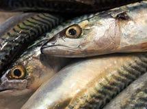 Fish raw Royalty Free Stock Photography