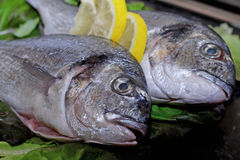 Fish ready to cook. With some lemon Stock Images