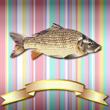 Fish realistic background and Gold ribbon. Fish realistic Striped Colorful Vintage background Sea Food and Gold ribbon Stock Photo