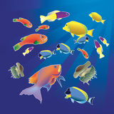 Fish of the Red Sea. Colorful fish and jellyfish Royalty Free Stock Photos
