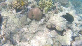 Fish of the Red Sea. Multicolored fish swim. Over the corals, slow motion stock video footage