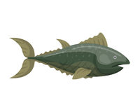 Fish redfin nature animal seafood vector illustration. Royalty Free Stock Images